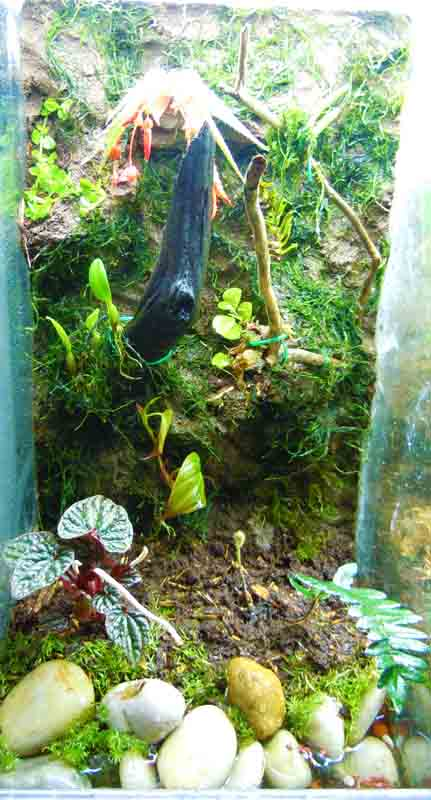 Living Background, Terrarium Mud, Vivarium Mud, Terrarium Modeling  Material, Tank Background,