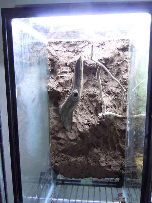 living background, terrarium mud, vivarium mud, terrarium modeling material, tank background,